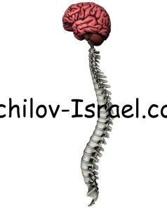 lechenie perifericheskoi nervno sistemy 238x300 - Патология спинного мозга и периферических нервов