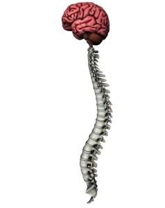 Лечение патологий спинного мозга в Израиле в больнице Ихилов